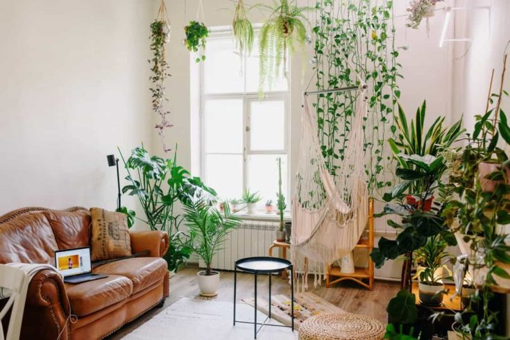 Greenery and Brown Couch